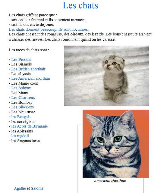 Les chats-Agathe L et Salome S