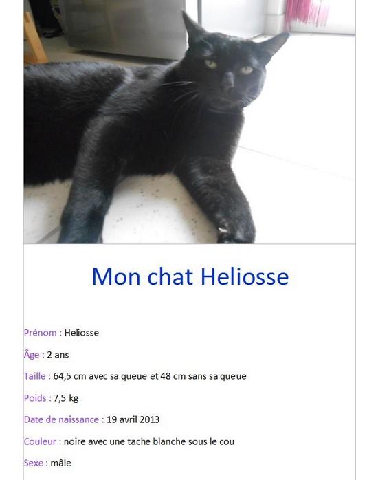 Mon chat Heliosse (1)-Zoe G