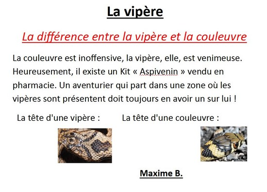 Vipere couleuvre-Maxime B