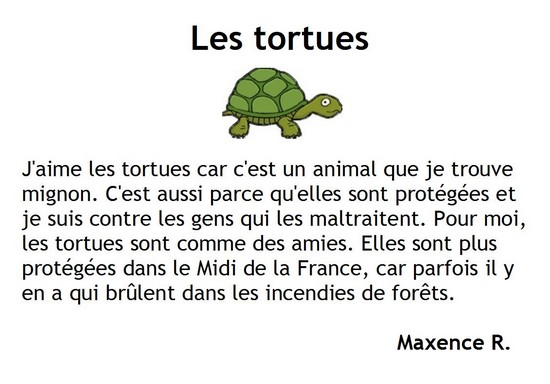 Les tortues-Maxence R