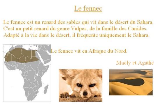 leFennec(MaelyEtSalome)